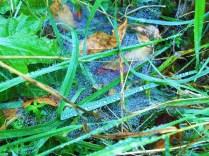 The view through a freshly-spun spiderweb