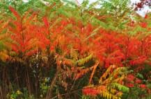Bright green and orange/Make a herringbone pattern/When layered in fall