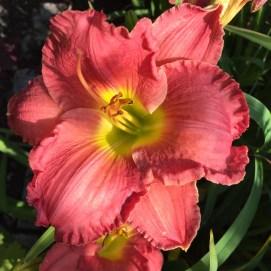 flowers 513