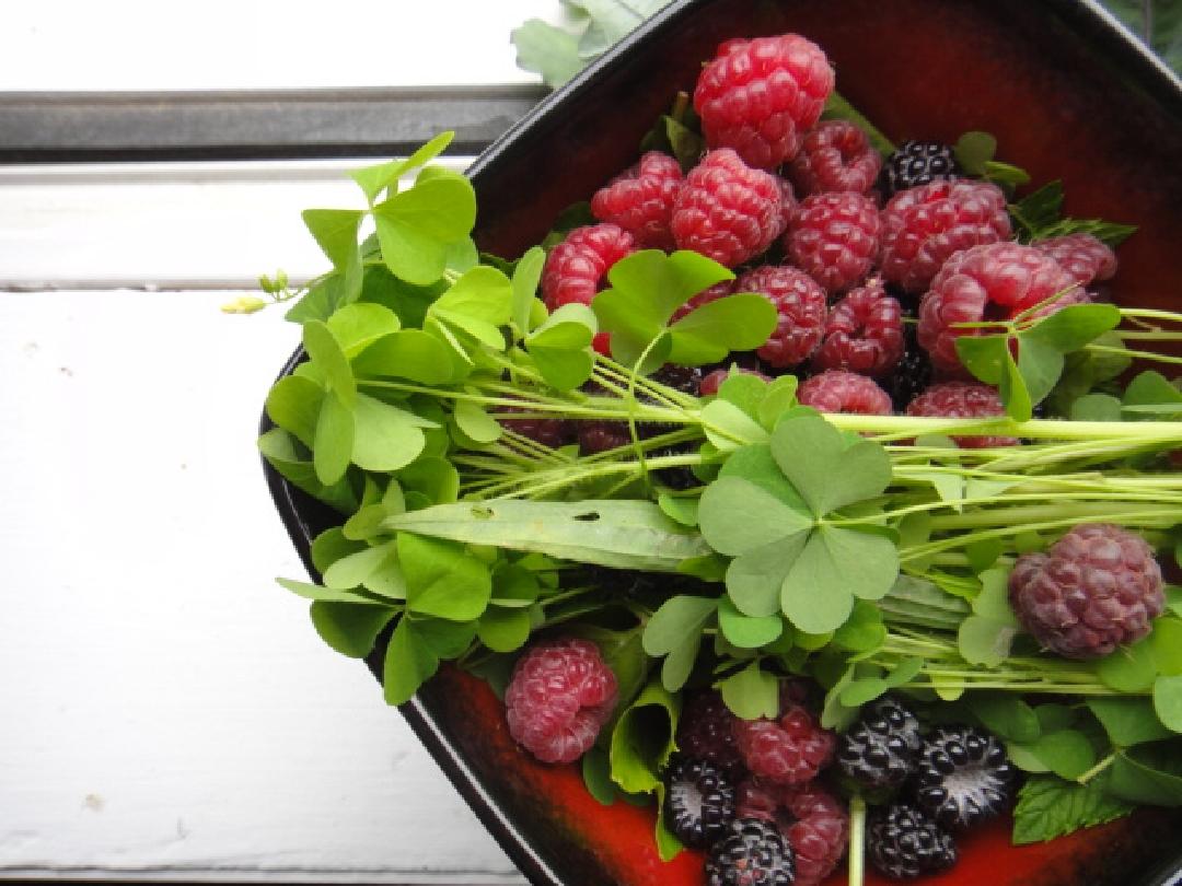 Raspberries and wild herbs