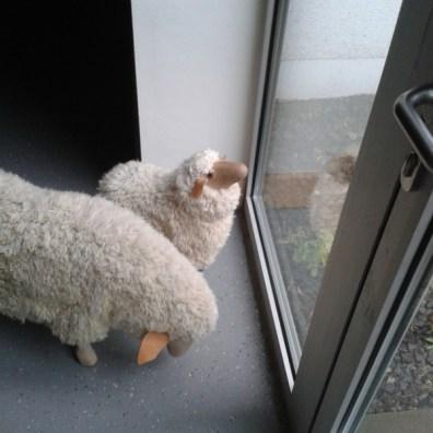 Im Februar stimmen sich alle schonmal in die jecke Zeit ein und es wandern Schafe durchs Haus. ;)