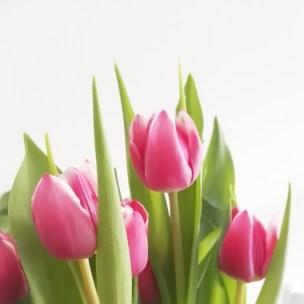 Die ersten Tulpen in der neuen Wohnung.
