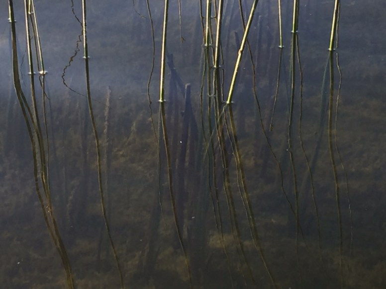 What's more interesting: reeds or reflections?