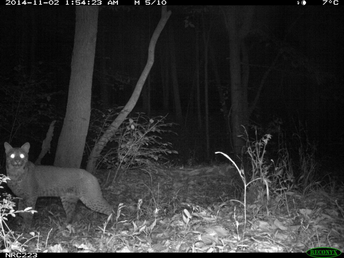 Urban Wildlife: Surprising Finds for Mammals on Camera Traps