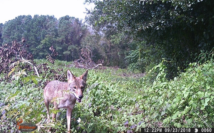 other camera trap