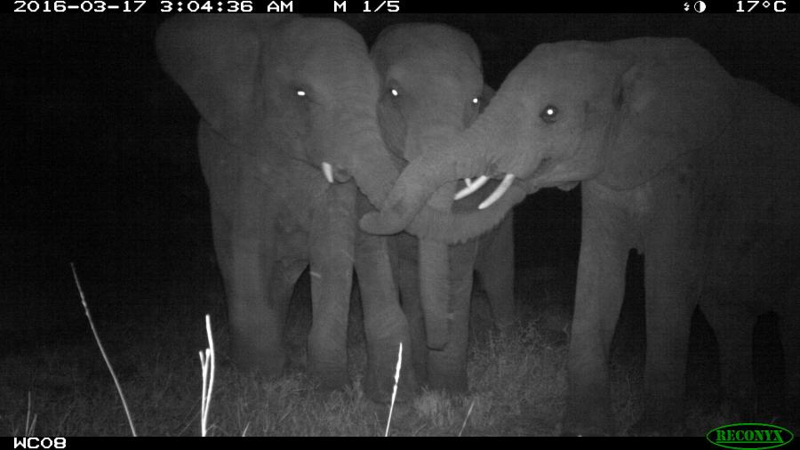 Camera Trap Photos from Kenya