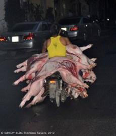 Pigs on motorbike, Vietnam