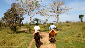 Pantanal - Cowboys