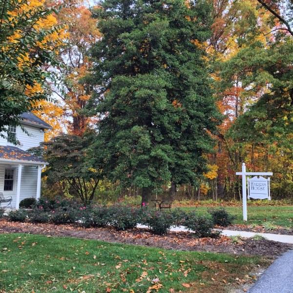 Colors of Fall | Harris House | Stevenson University | October 27, 2015