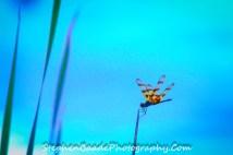 Artistic Dragonfly