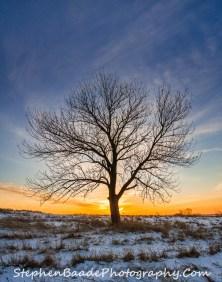 Tree at Horicon