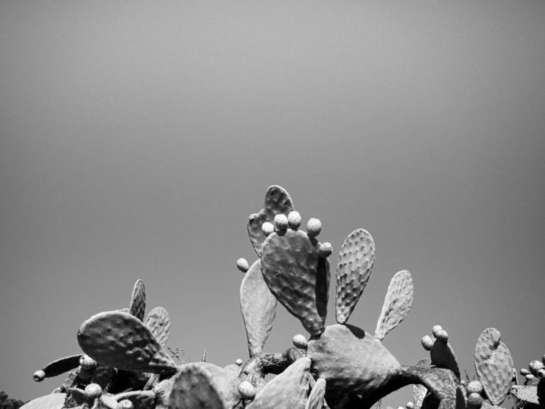 Yaliskari Cactus