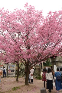 Blazing pink