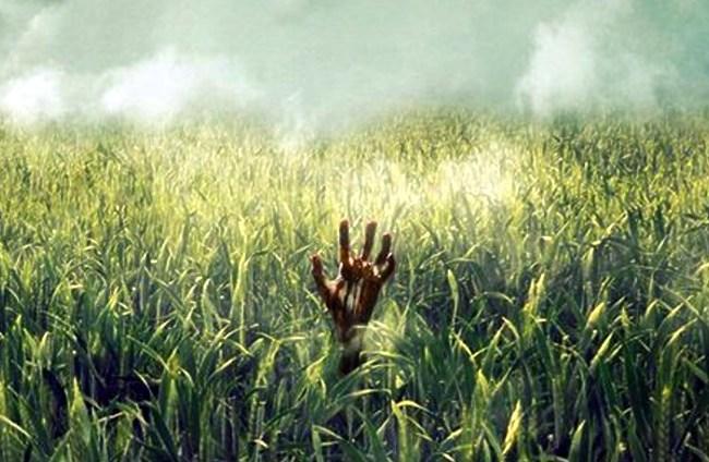 In the Tall Grass: Se anunció la fecha de estreno