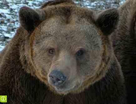 grizzly-bear-sml-ondrej-zicha-aol.jpg