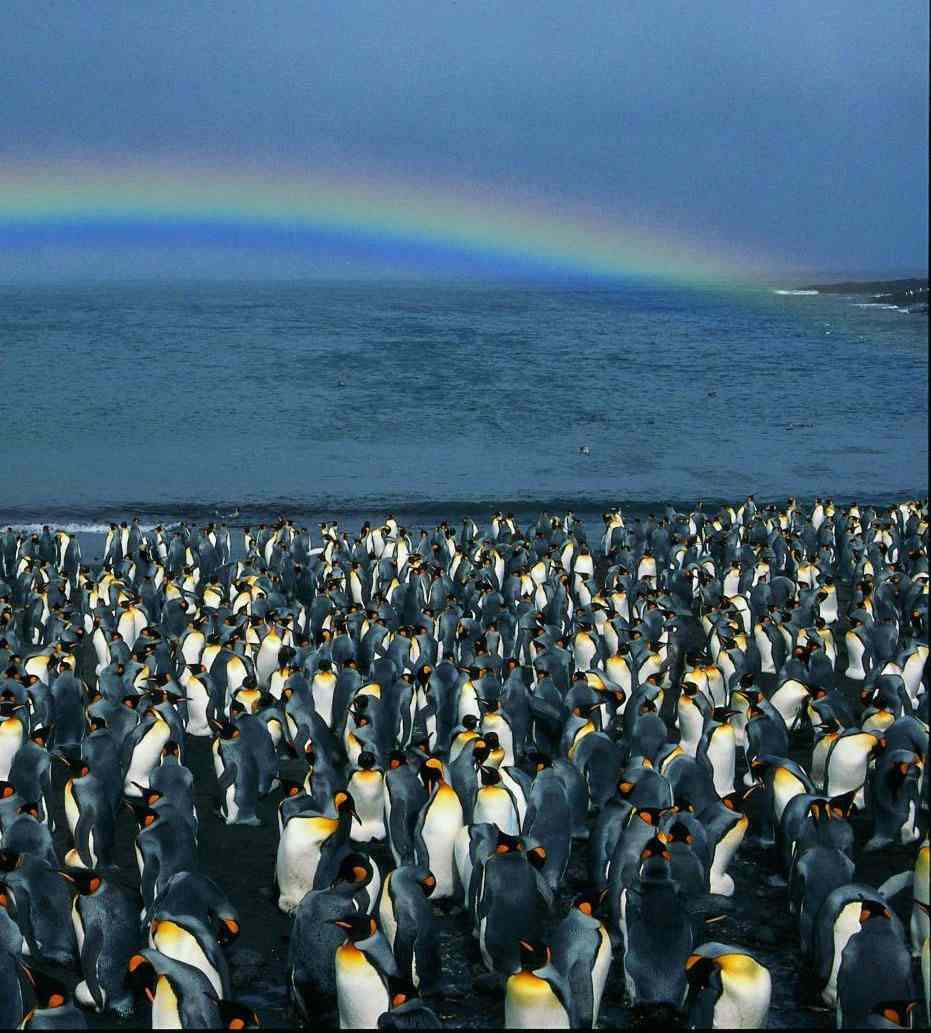 king-penguins-on-beach-pnas-sml.jpg