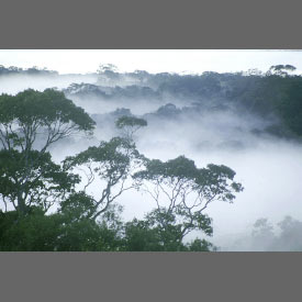 2_4amazon_forest
