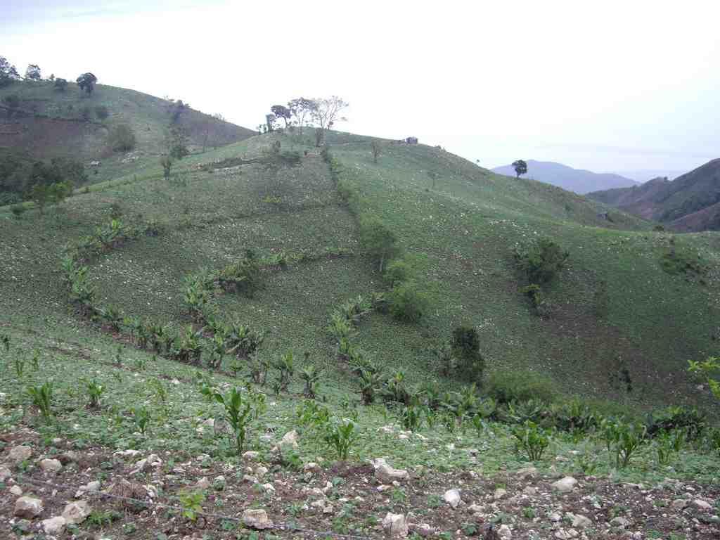 Haiti Living Terraces - Brad Lewis Floresta
