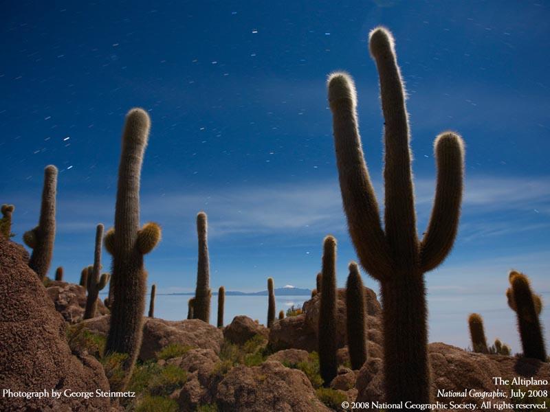 moonlit cactus - peru