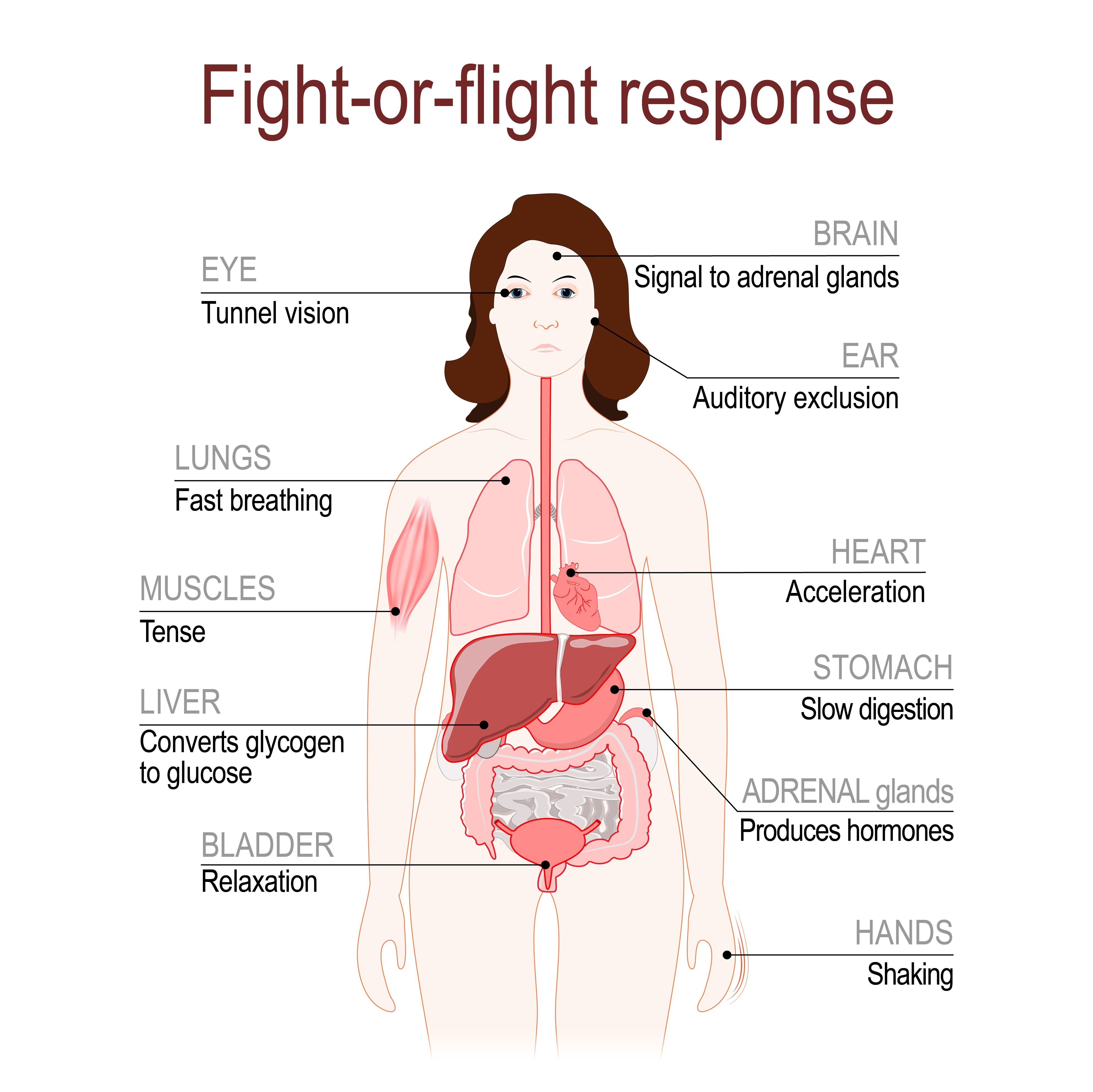 Public Speaking And The Fight Or Flight Response