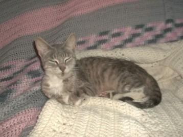 Former foster cat chillin' on crochet blanket