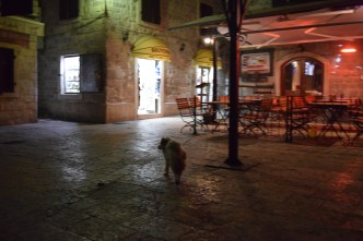 He led us through the city and barked at cats that approached us.