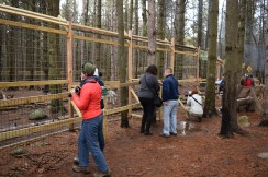 Last spring, this enclosure was finished. It's bigger than the one they had before and now the wolves only need one walk a day.