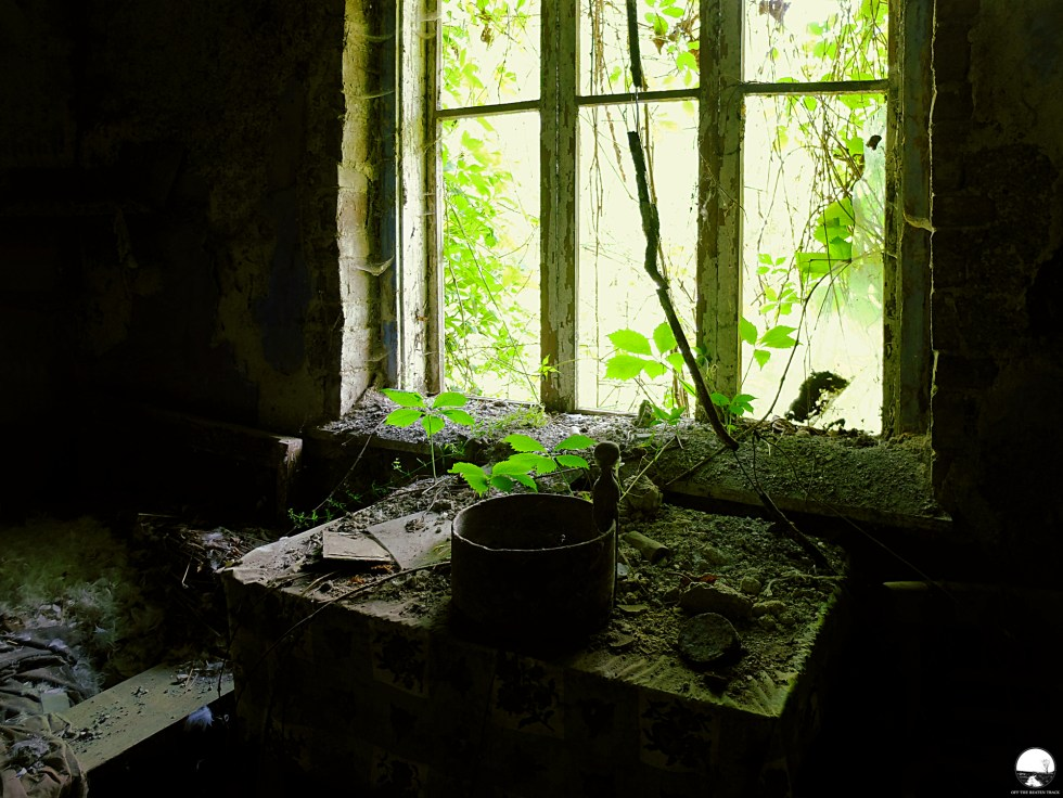 The Abandoned House 'What the Vines Are Hiding' (Poland) - 14