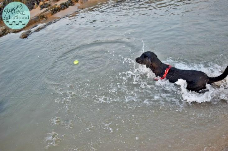 jack splashing in the tidal pool