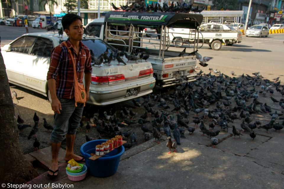 Yangon... where the pigeons wait patiently aligned along electric cables, nearby a corner where a corn seller wait for customers that will come to create good karma feeding the birds