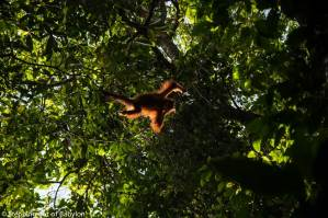 Bukit Lawang… keep wildlife wild!