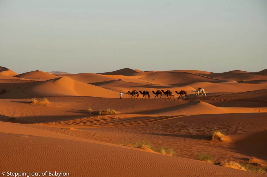 Erg Chebbi at sunrise with the dromedaries returning to Merzouga after the sunrise trip