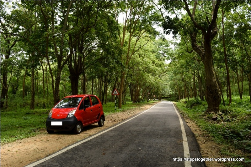 Drive through the Thick Forests of B R Hills