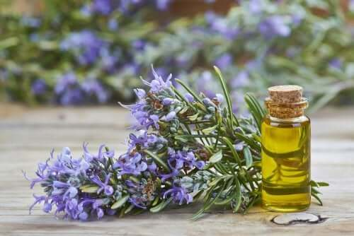 A bunch of rosemary and its oil.