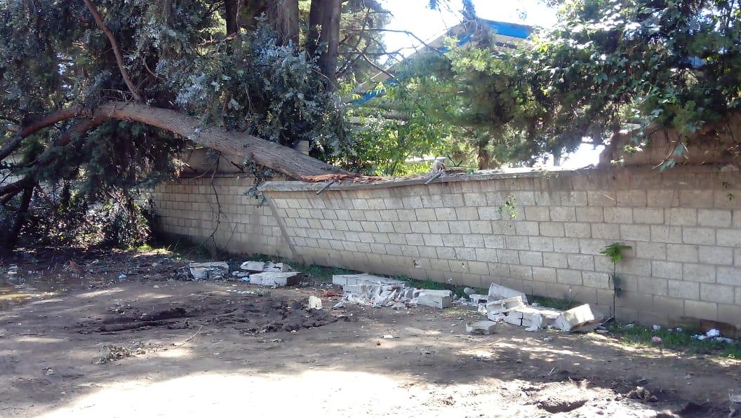 Árbol cae y destruye muro perimetral de instituto en Xela