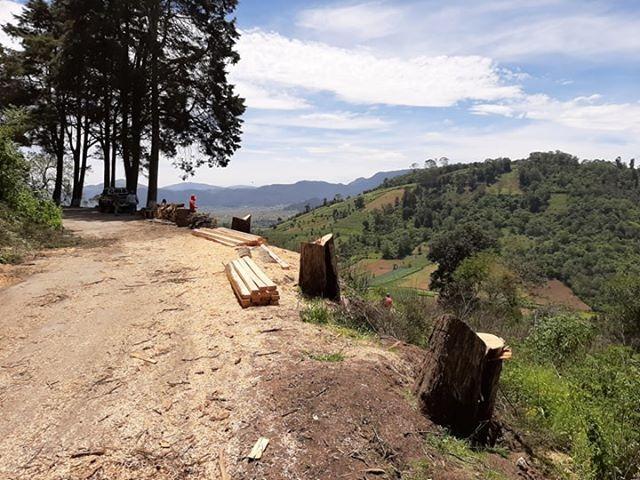 Tala de árboles en el Cerro El Baúl, no fue ilegal