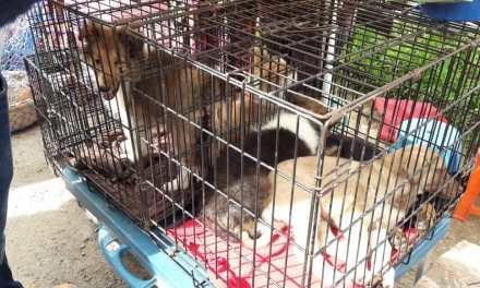 Socializan reglamento para prohibir venta de perros y gatos en Salcajá