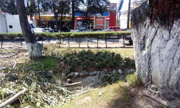 ¿Qué pasó con el caso de tala de árboles en el Centro Intercultural?