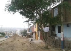 Pobladora pide que municipio mantenga árbol que por 25 años permaneció en su vivienda