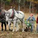 Draft Horse Management Minor