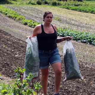 Sustainable Food Systems Major, garden, harvest