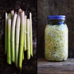 Fermented Cattail with Pascal Baudar