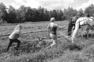 photo of students plowing with draft horses