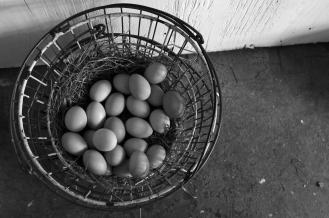 photo of eggs in a basket on the farm