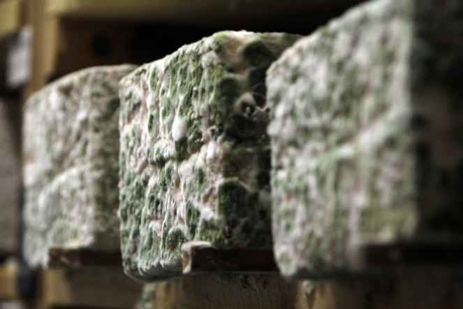 blocks of cheese with mold growing on the outside aging on a wooden shelf