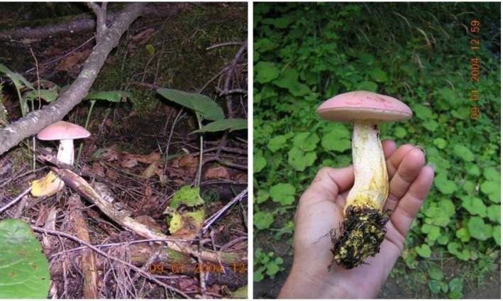 a person's hand holding a wild mushroom