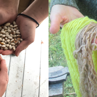 2 photos collage. Right side hands holding skeins of yarn in bright green, pale green, orange-red, dark pink, and light brown, person in background with green sweater and blue jeans; left side, 3 sets of hands cupped and holding different varieties of beans, wood floor in background.