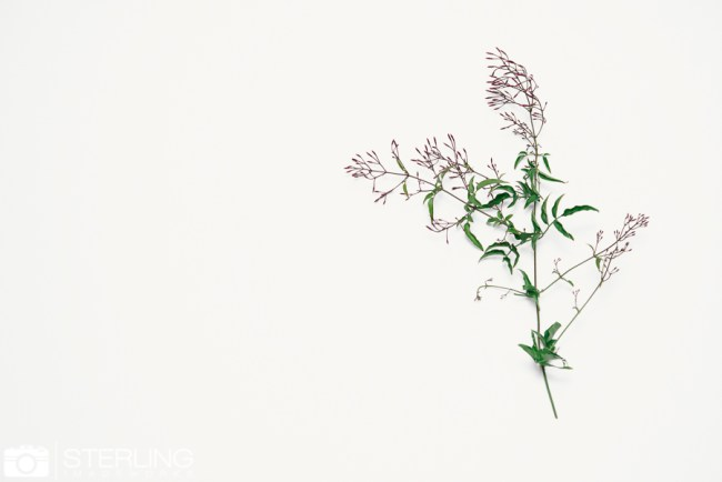 Zimmerman(blog)-25