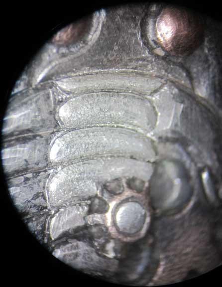 Clockwork_Trilobite_Pendant_83