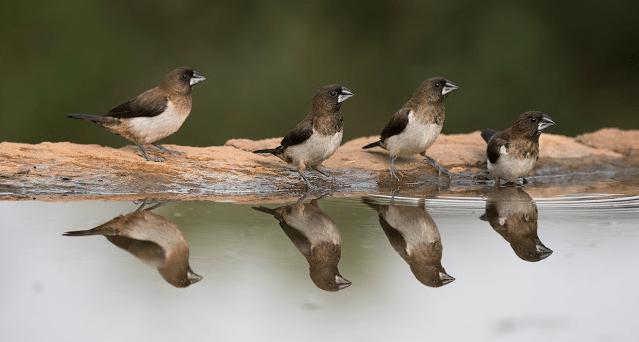 5 Things I Learned Reading: Bird By Bird, By: Anne Lamott